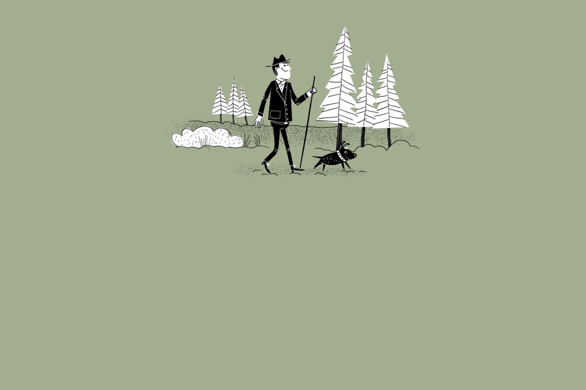 Ruhe beim Waldspaziergang im Rissen